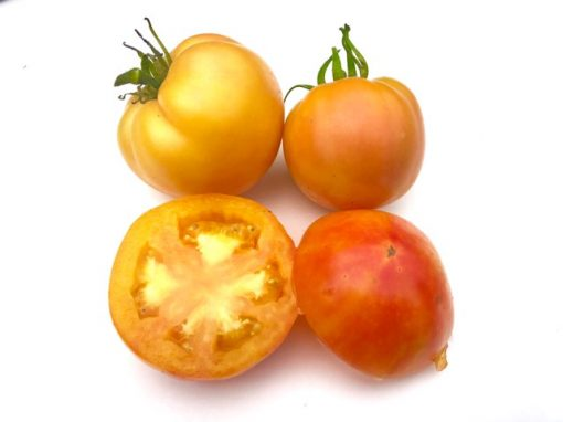 Sunkissed Peach Tomato Seeds